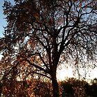 October Tree by Barbara Wyeth