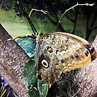 Butterfly by KjunSL1