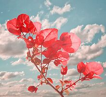Flowers in the Sky by DFLC Prints