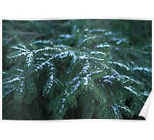 Snow On Tree Branches Poster