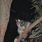 Mum and Baby Brushtail Possums by Adrian Kent