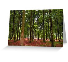 Beautiful Forest landscape Greeting Card