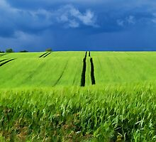 Green grass field with dramatic beautiful sky background by Ron Zmiri