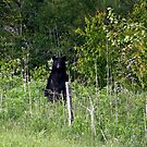 Black Bear by Gary L   Suddath