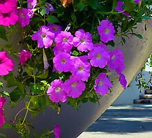 a display of petunia's by Leone