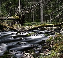 17.11.2014: River in the Forest II by Petri Volanen