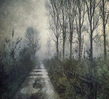 Fog on the Bridleway by Sarah Jarrett