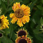 Sunflowers by richiewright