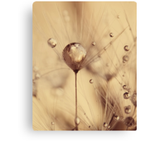 touch of gold Canvas Print