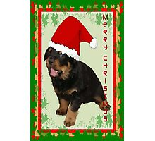 Cute Merry Christmas Puppy In Santa Hat Photographic Print
