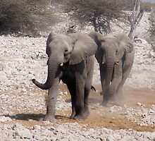 Elephants on the rampage! by tj107