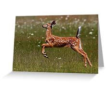 Summer Fawn - White-tailed Deer Greeting Card
