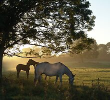 september morn by Sean Farragher