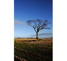 The Rihanna Tree And Bales Photographic Print