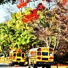 Parked School Buses by Susan Savad
