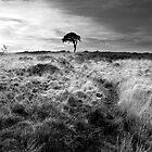 Lone Tree by SpraggonPhotography