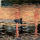 REFLECTIONS ON A DUCK by PhotogeniquE IPA