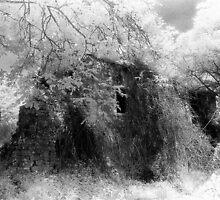 Abandoned by Bruce Halliburton