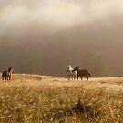 Free Horses by Catalin Soare