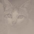 Kitty v.4 by tropicalsamuelv
