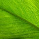 Foliage Flow by Robert Meyer