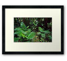 in the wet tropics.... Framed Print