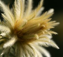Feather Duster by saharabelle