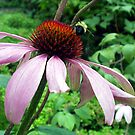 Coneflower with bee by lynmck