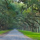 Oak Canopy by Charlie