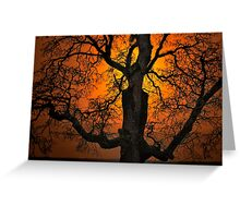 The Glow and Old Oak Greeting Card