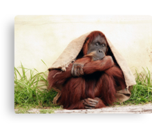 Taking shelter  Canvas Print
