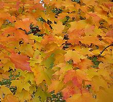 Autumn Leaves by Timothy  Ruf