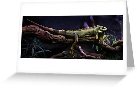 Flat out like a Lizard by Lisa  Kenny