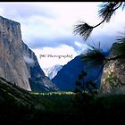 Yosemite by Melissa  Carroll