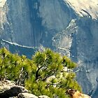 Half dome and random animal by Melissa  Carroll