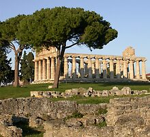 Paestum Temple by Mary  Lane