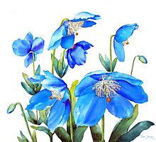 Himalayan Blue Poppies by Pat Yager