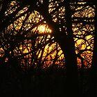 SunRise by Lucinda Jones