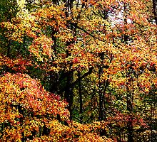 Fall Color II by Gary L   Suddath