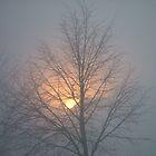 SunRise Gray by Lucinda Jones
