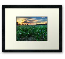 Michigan Fields of Corn Framed Print