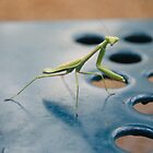 The Praying Mantis Stare by Julia Morris