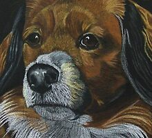 Penny - Lhaso Apso Mix - Commission by Anita Meistrell Putman