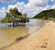 Mangrove in the sea by FramedFeelings