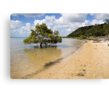 Mangrove in the sea Canvas Print