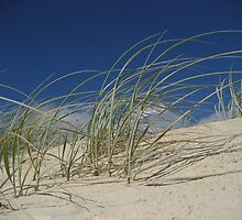 Dune Grass001 by capitalm