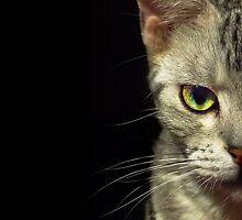 Beautiful Cat Portrait by Samuel Rollings