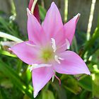 Lushous Pink by brinadragonfly
