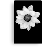 Black and White Gazania [Print and iPhone / iPad / iPod Case] Canvas Print