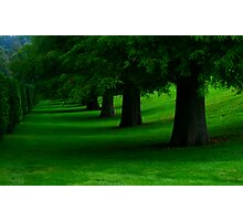 Tree Line Photographic Print